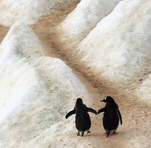 image011_pinguins.jpg