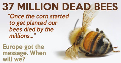 bees_found_dead_elmwood_ontario_canada_large_planting_gmo_corn_seed_treated_neonicotinoid_pesticides.jpg