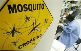 mosquito_crossing_www.reuters.com.jpeg