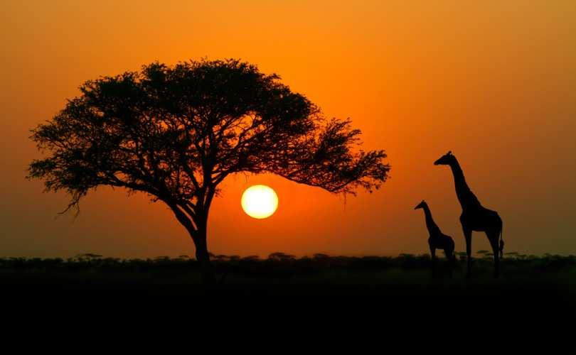 africa_population_control_810_500_55_s_c1.jpg