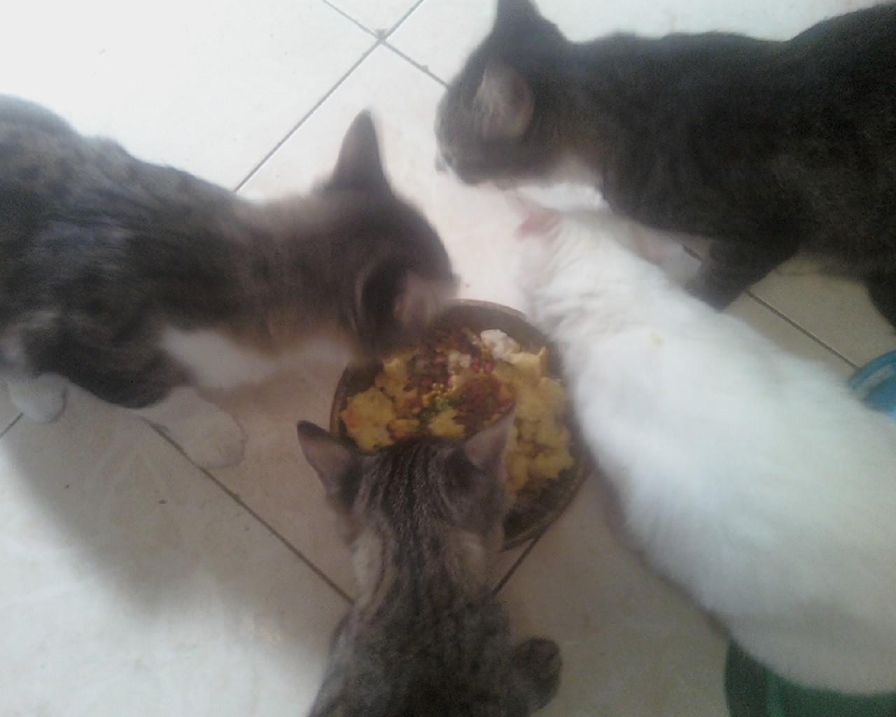 gatos_comendo.jpg