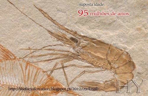 SC0084_shrimp_2_P_sm.jpg