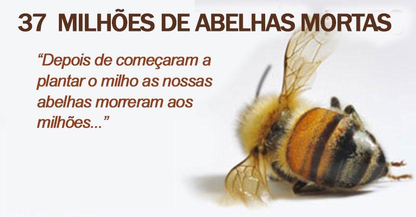 bees_found_dead_P_a.jpg