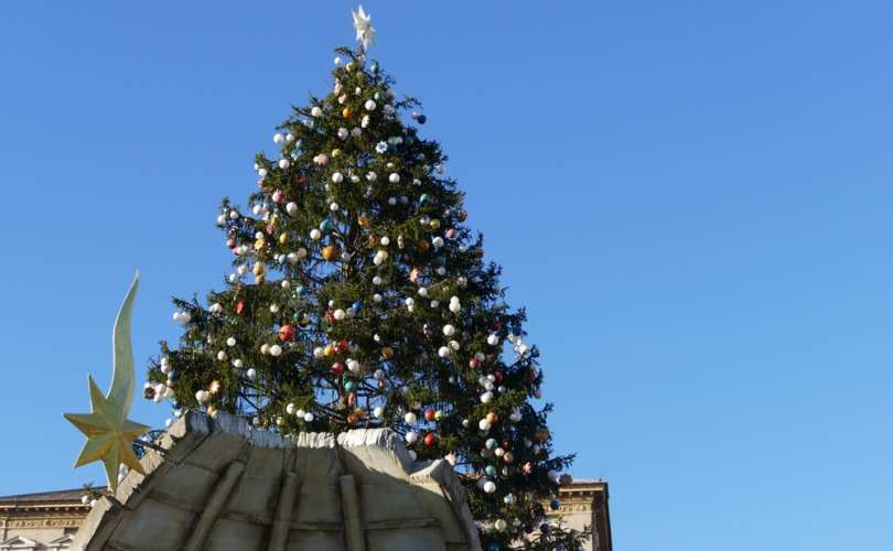 Vatican_Christmas_tree__entire__2017_810_500_55_s_c1.jpg