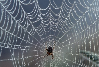 spider_web_with_dew.jpg