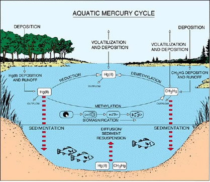 mercury_water_cycle.jpg