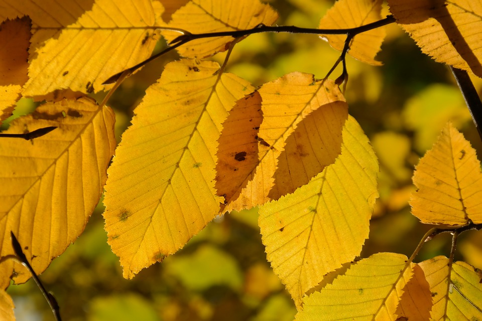 leaves_228234_960_720.jpg